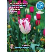 نسخه الکترونیک مجله اطلاعات هفتگی شماره 3883